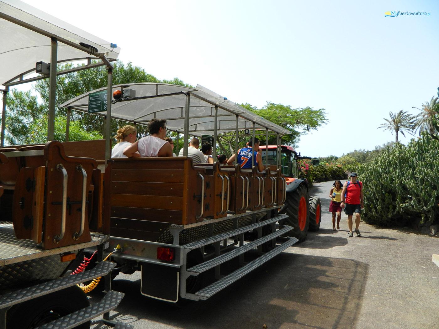 Oasis Park Fuerteventura - kolejka