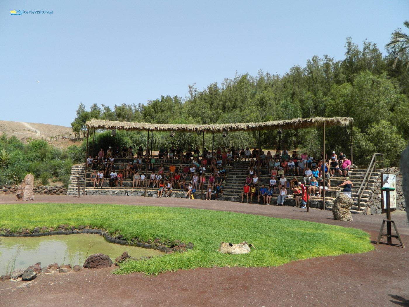 Oasis Park Fuerteventura - pokaz ptaków drapieżnych