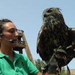 Oasis Park Fuerteventura - ptaki drapieżne